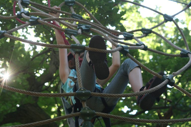climbing-forest-906973_1920